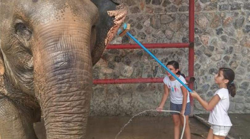 Hua Hin elephant camp